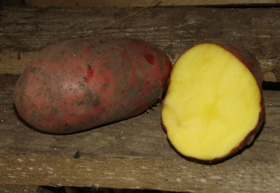 картофель, фото, описание