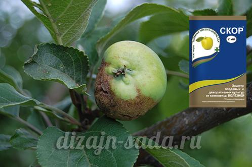 препарат скор от парши на яблоне