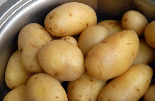 картофель Голубизна описание