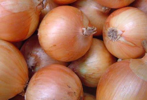 лук халцедон выращивание