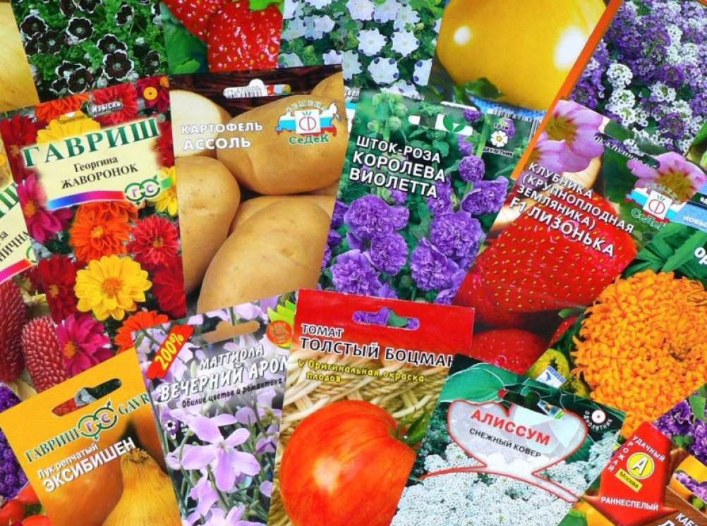 магазины семян цветов