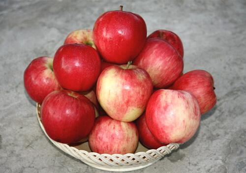 Сорт яблони Строевское