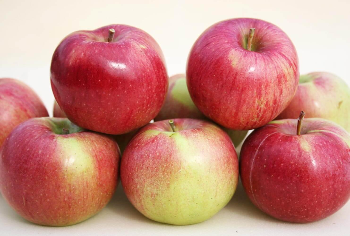 сорта яблонь фото