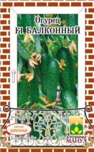 огурец балконный фото