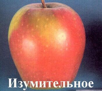 лучшие сорта яблонь фото