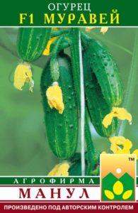 огурец муравей фото плодов