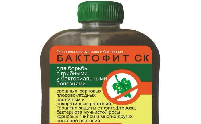 бактофит ск фото