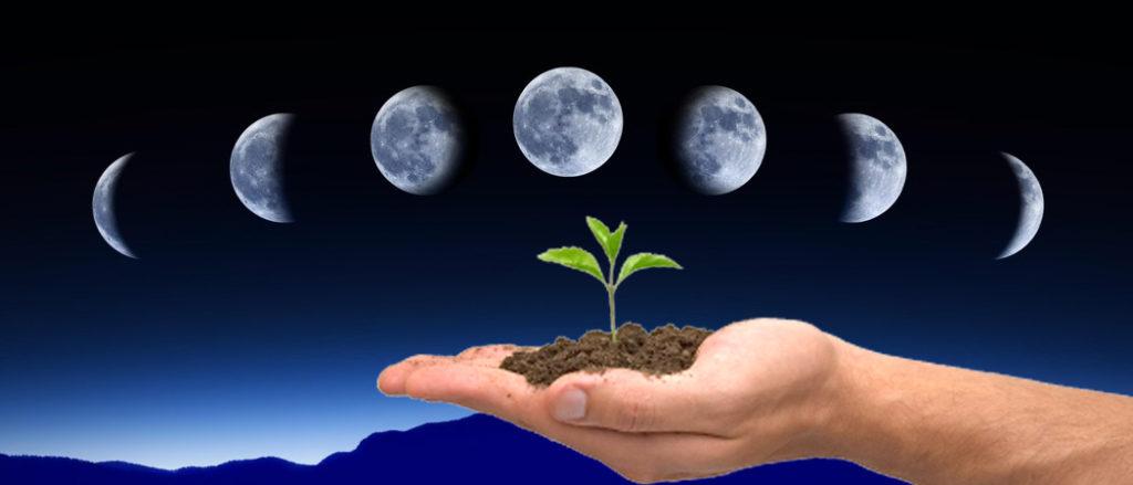 лунный календарь садовода январь 2020