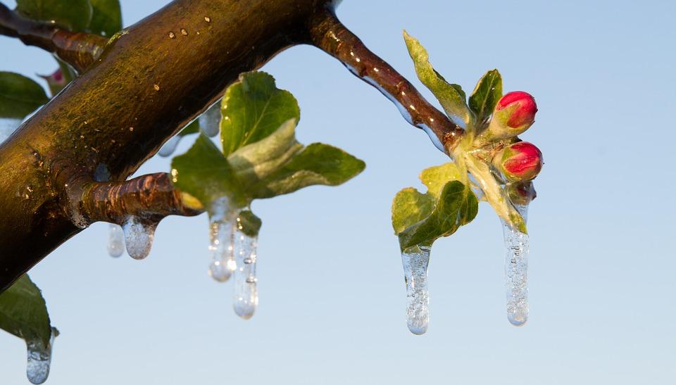 Чем обработать плодовые деревья и кустарники весной
