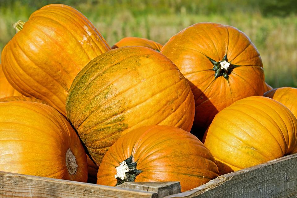 Медовая сказка: самые вкусные и урожайные сорта тыквы