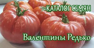 семена редких сортов томатов