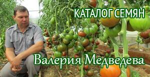 семена томатов от Валерия Медведева