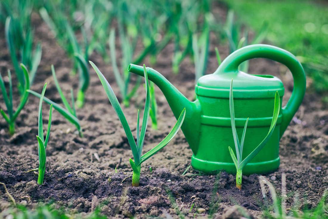 чем полить землю чтобы не росла